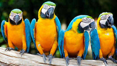 Latest Colorful Parrot HD desktop wallpapers