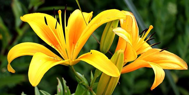 hoa ly trang dep nhat the gioi 2