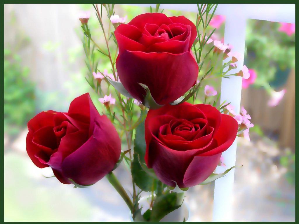 Wallpaper download dil - Free Downlod Love Rose Dil Hd Wallpapers 0031