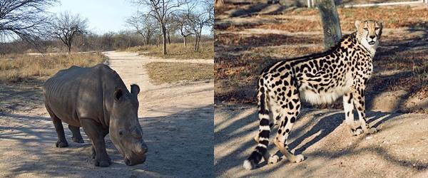 Tiere aus Südafrika, Geparden und Nashörner auf meinem Blog