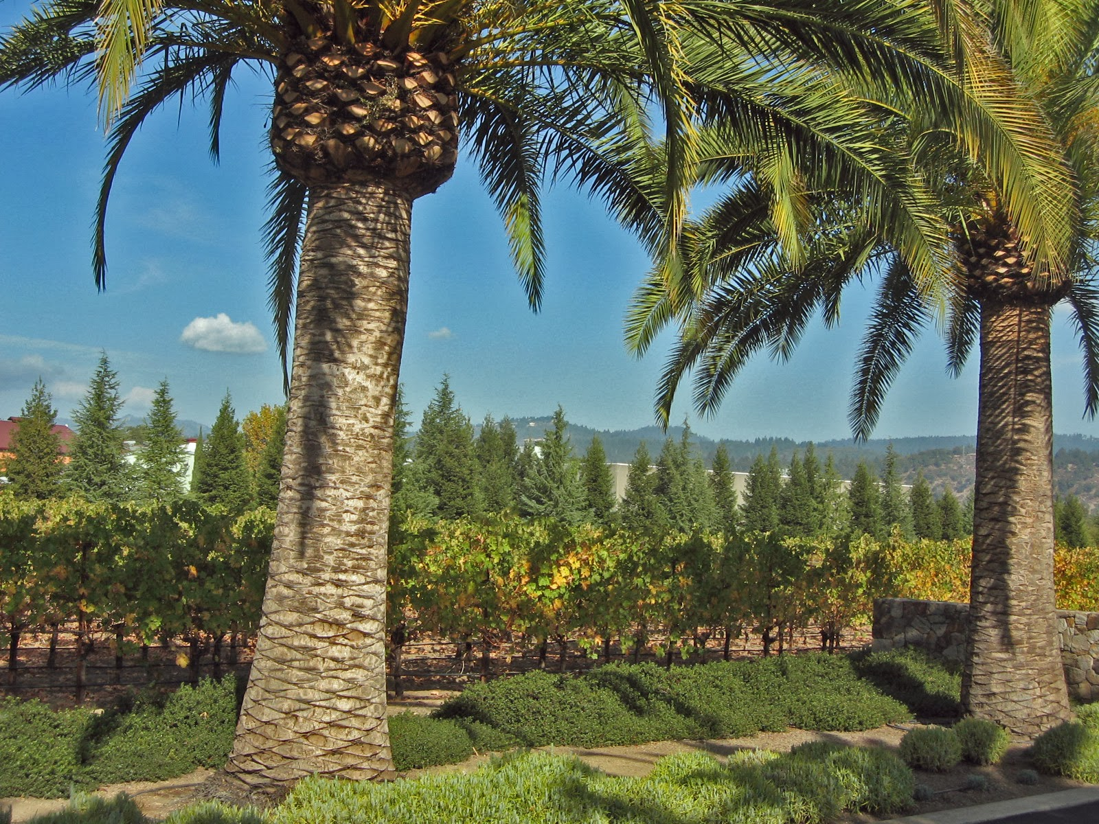 Bach To Bacchus Heitz Wine Cellars Revisited