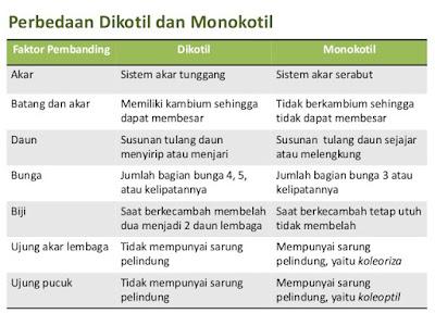 Perbedaan dikotil monokotil, Ciri Tumbuhan Monokotil Beserta Contoh