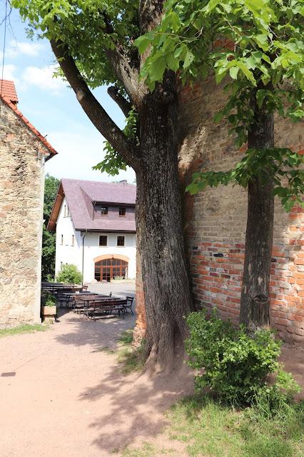 drzewo przy domu