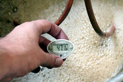 Checking the temperature as the lager wort is almost ready to pitch.