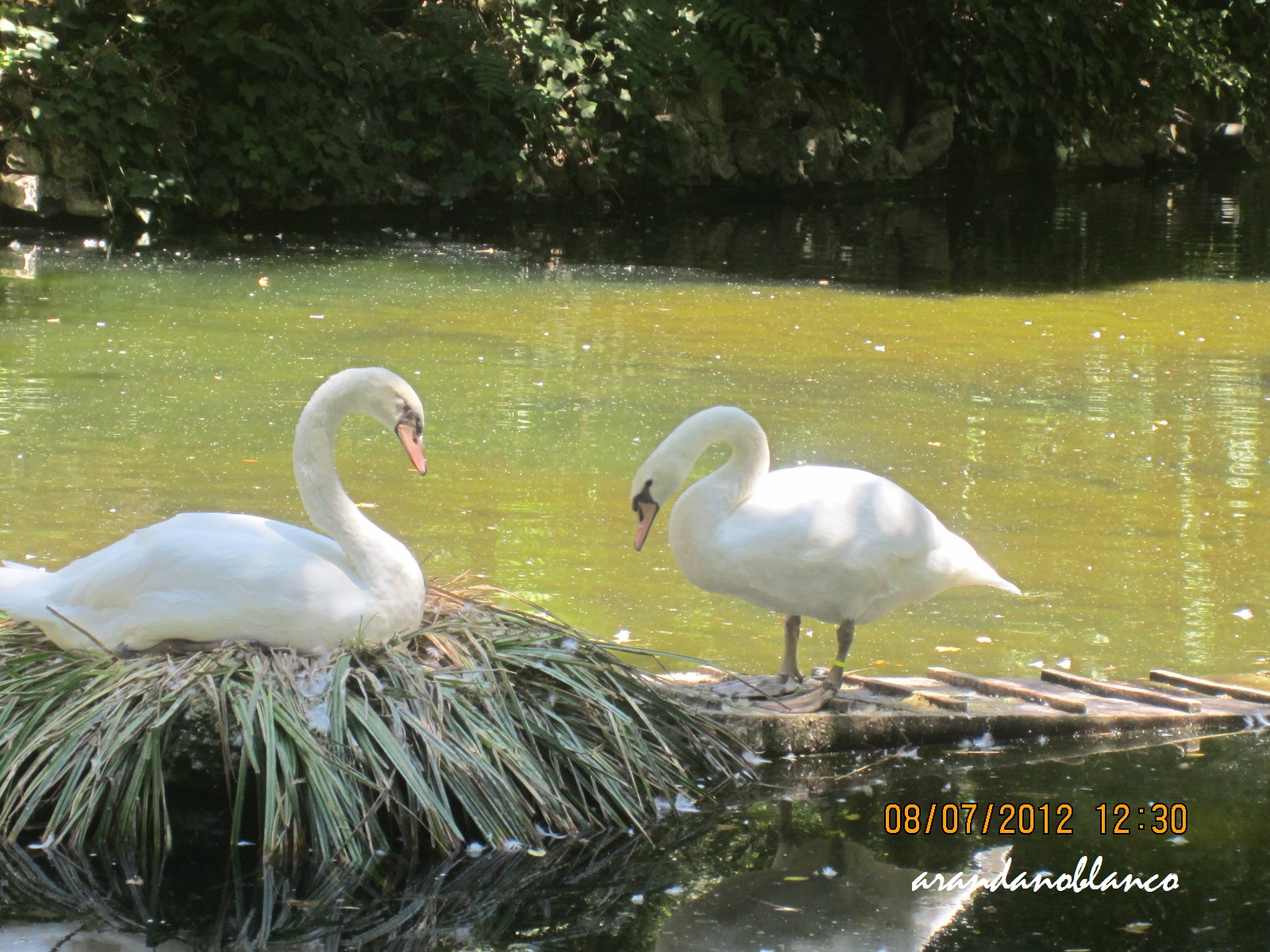 Parquemarialuisa encinarosa parque de mar a luisa for Estanques para patos prefabricados