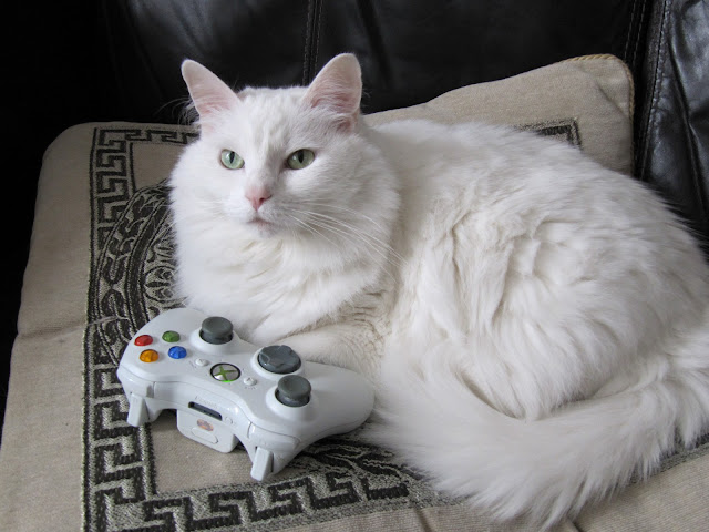 She's Playing Xbox! by BrotherMagneto from flickr (CC-NC)