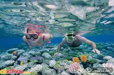 Đảo Hòn Mun Nha Trang xứng đáng là khu bảo tồn biển của Việt Nam