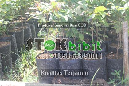 Durian Bawor | Jual Bibit Durian Bawor | Bhineka Bawor    berkualitas