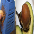 Avocado Seed Health Benefits: Never Throw Away Avocado Seeds Again