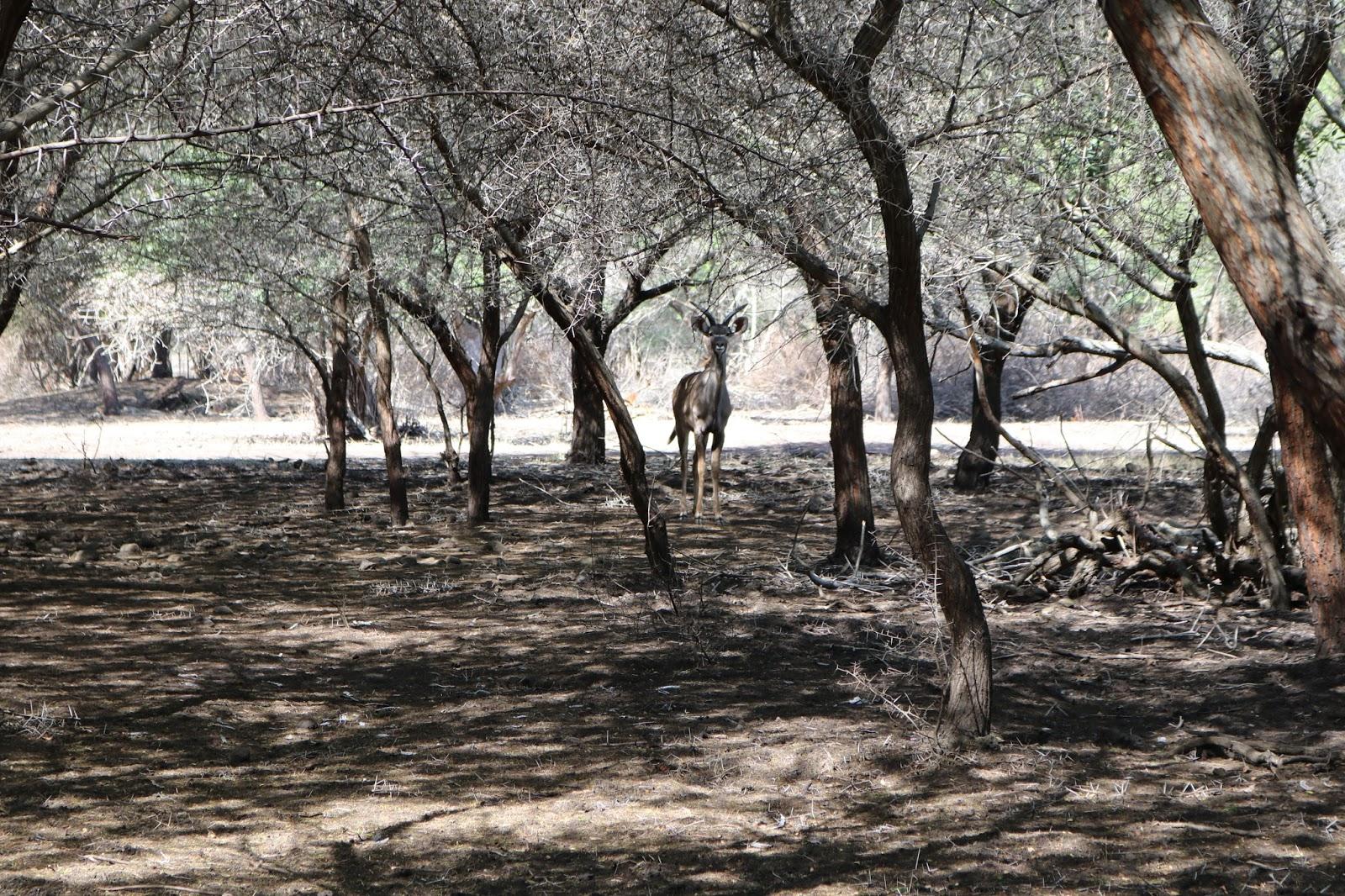 Casela Horse Safari