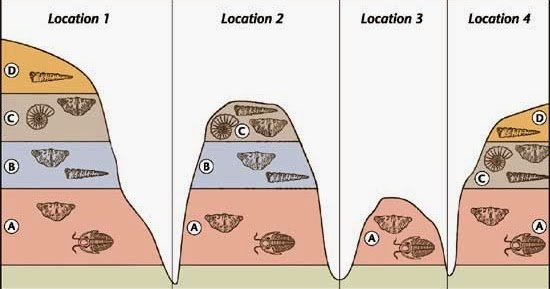 Index fossils dating rock layers