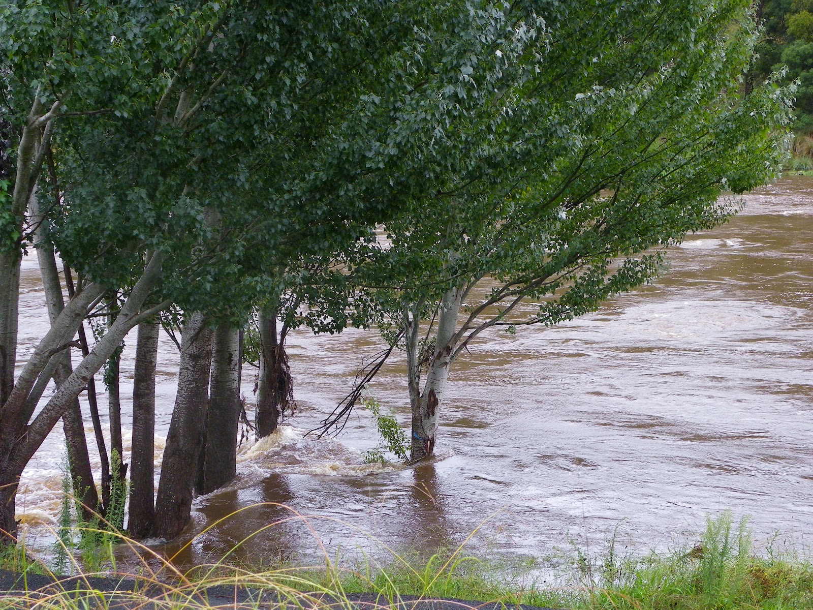 queanbeyan river - photo#33