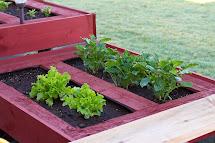 Multibeavo' World Pallet Garden Growing