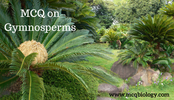 MCQ on Gymnosperms