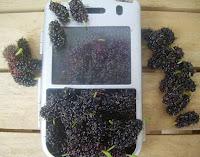 blackberries in a blackberry