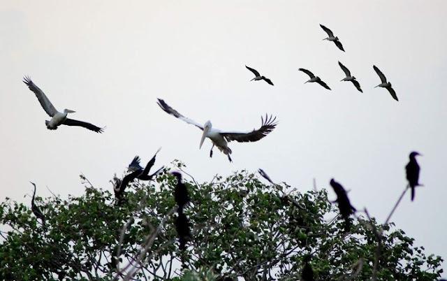 Chim bay ở vườn chim Tư Na