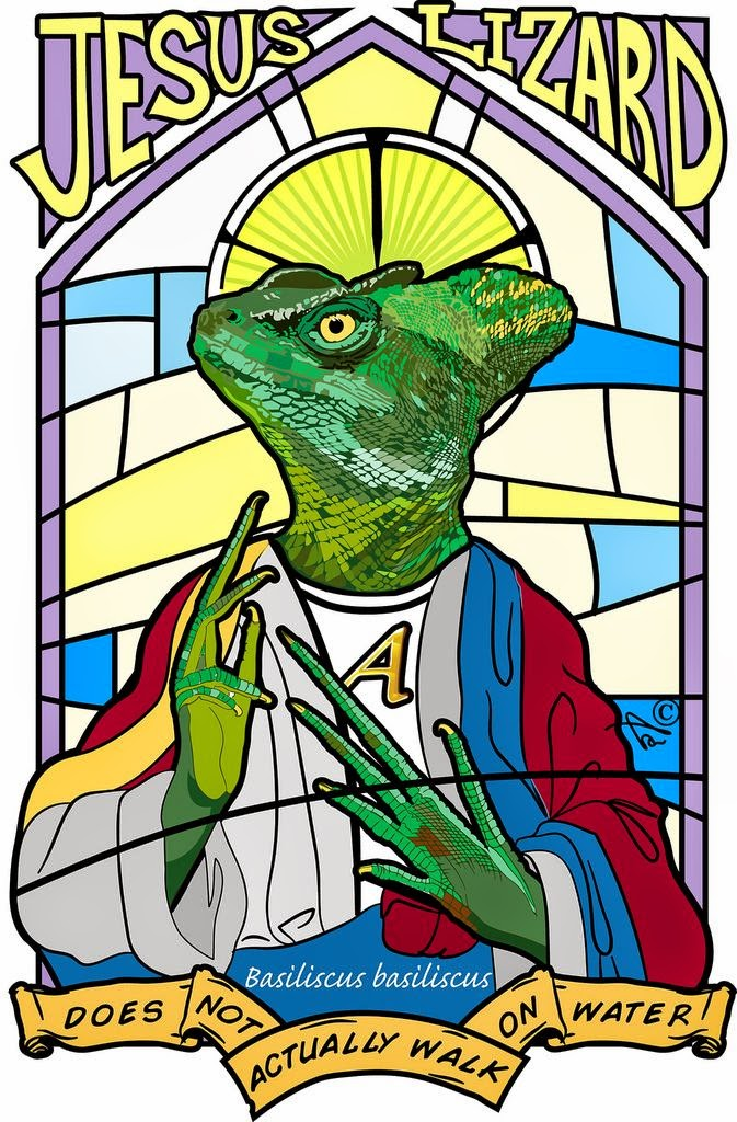Jesus lizard picture