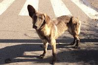Assicurazione auto e incidente con cane randagio: chi paga?