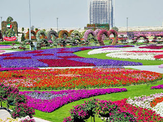 stock-photo-dubai-uae-januari-dubai-miracle-garden-the-world-s-biggest-natural-flower-garden
