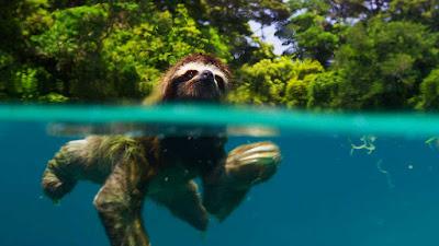 film fotografi terbaik wajib nonton bbc planet earth