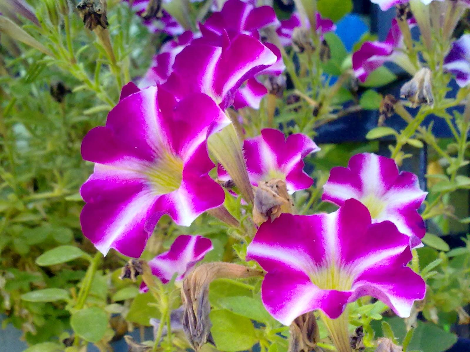 Flores Para Primavera Y Verano Entre Patios Y Plantas - Flores-bonitas-para-jardin