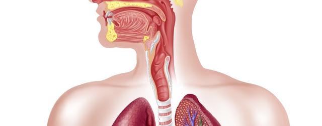 Esofago y cuerpo humano
