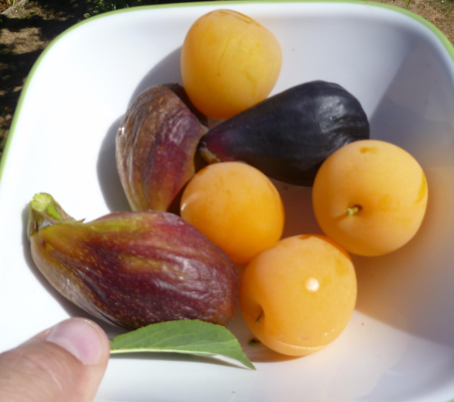 Growing Greener In The Pacific Northwest: Fresh Fruit