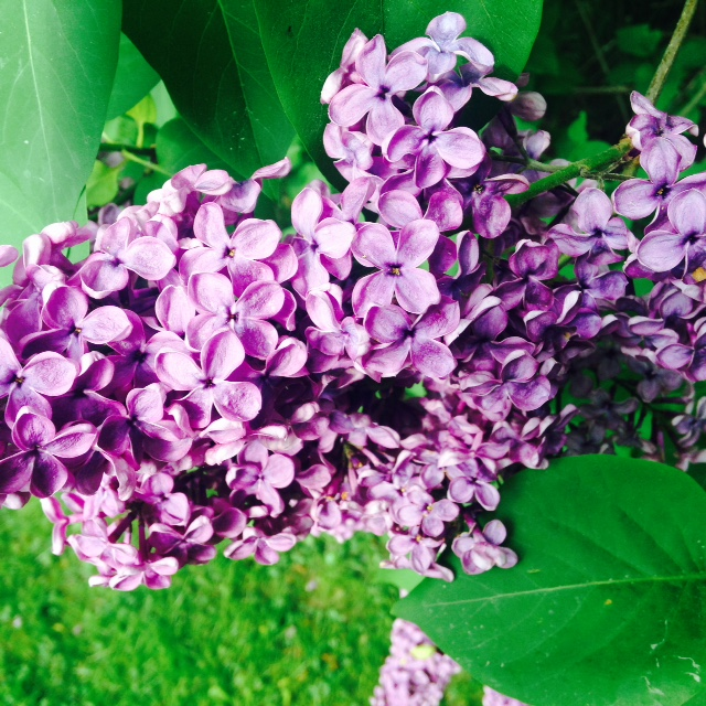 wiosenny rytuał