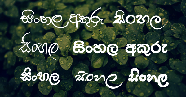 We have provided plenty of Sinhala fonts to install on your computer. You can download one of the most popular Sinhala fonts in Sri Lanka by this article.    Many people use these Sinhala fonts for graphic work, office documents, social media posts, etc. You can see below what the font looks like and you can download the font by clicking on it.