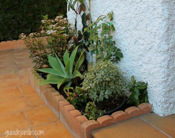 Arreglando el arriate de la terraza guia de jardin - Arriate jardin ...