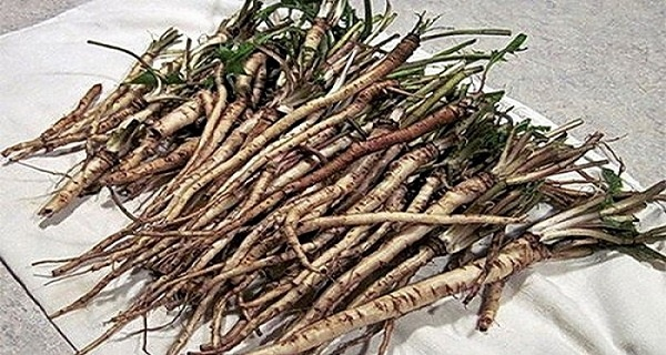 100 Times More Effective Than Chemotherapy: A Herb That Kills Cancer Cells In 48 Hours