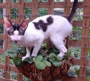 www petpooparazzi blogspot com: Hypoallergenic cats? Do they
