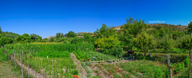 Gardens in Gradeshnica village