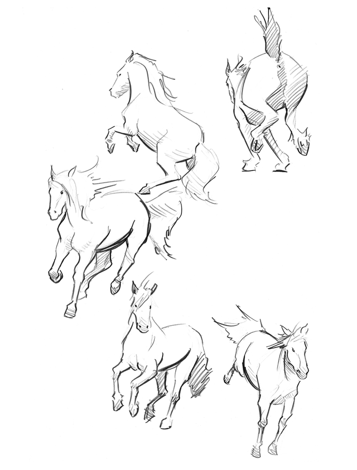 Related Keywords Amp Suggestions For Horse In Motion Drawing