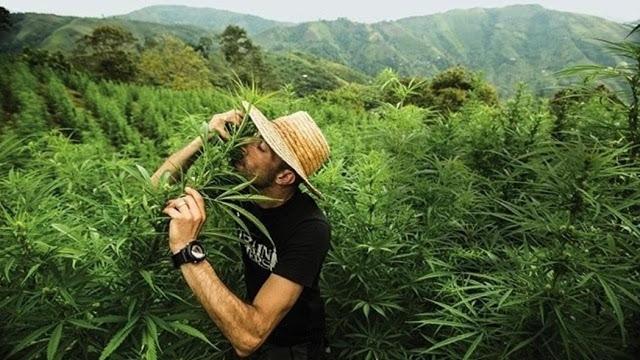 cannabis marihuana medicinal méxico