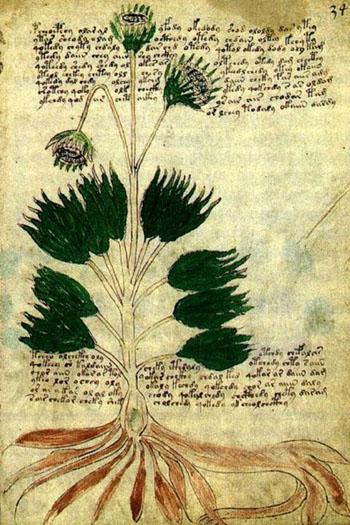 The Voynich Manuscript | Pleiadian Channelings