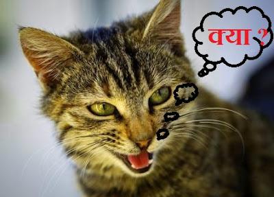 असम में कौन सी भाषा बोली जाती है