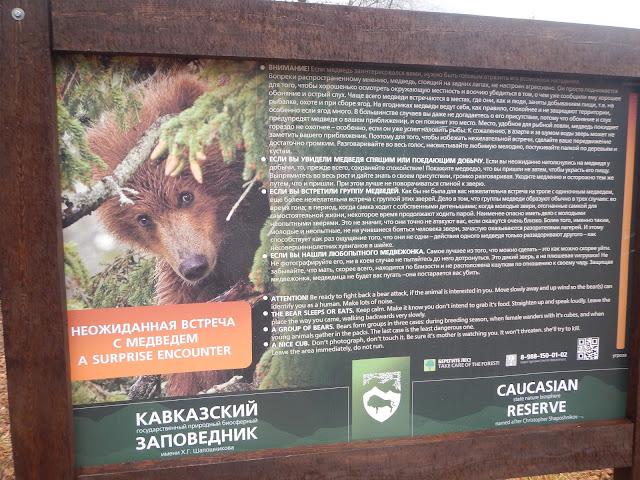 Объявление в Заповеднике про медведя