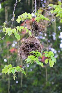 bird nest hanging from tree