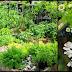 Best Medicinal Plants To Grow In Your Garden