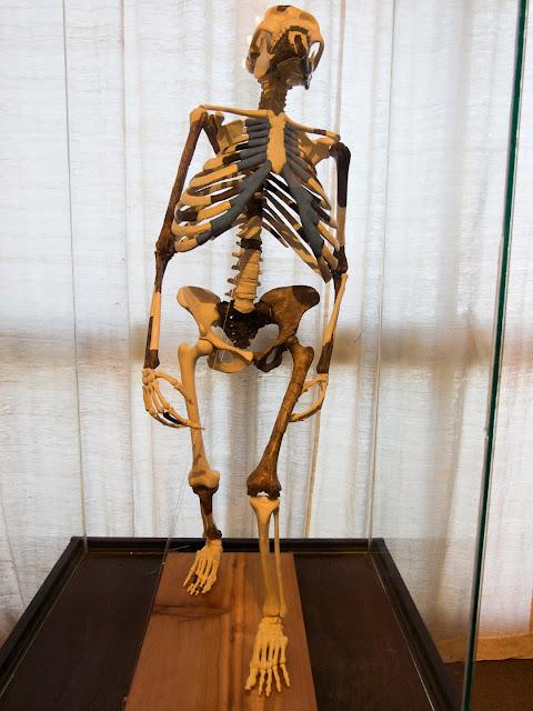 Hello Talalay Lucy Australopithecus Ethiopia