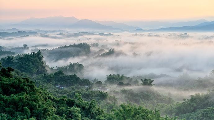 Wallpaper: Fog over Forest