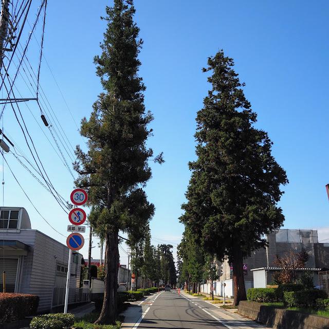 中山道 杉並木
