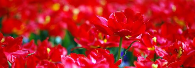 Flores de Peonia