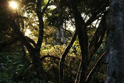 Forest Jungle of Mindanao