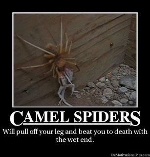 Giant scary spiders memes - photo#30