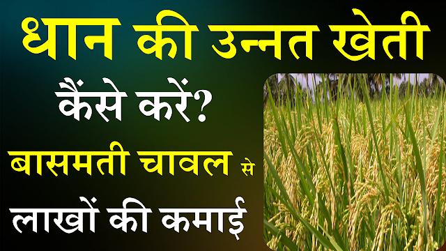 Hybrid dhan ki kheti,Dhan ki kheti jankari,Kheti,धान की खेती,Dhan ki kheti hindi,Dhan ki kheti kaise kare,Dhan ki kheti karne ka tarika,Dhaan ki kheti in hindi, धान की उन्नत खेती,धान की खेती कैसे करें,खेती,Kheti, धान की फसल,धान की फसल की जानकारी,धान की नर्सरी,धान की खेती,धान की खेती कैसे करें,धान की उन्नत खेती,धान की रोपाई,धान की नर्सरी की देखभाल,धान,dhaan ki kheti in hindi,dhan ki kheti,dhan ki kheti hindi,dhan ki kheti karne ka tarika,dhan ki kheti kaise kare,dhan ki kheti karne ki vidhi,image,dhan farming image