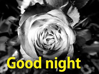 good night white rose hd image