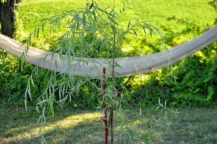 little willow chanson paul mccartney