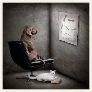 perro y gato arte